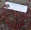 Guggul (Commiphora wightii), packet of 5 seeds, organic