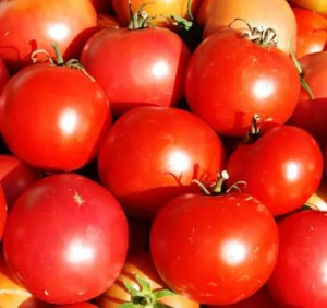 Tomato, Crimson Sprinter (Lycopersicon esculentum), packet of 50 seeds, organic