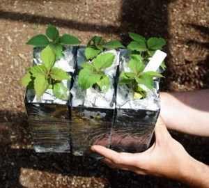 Plant shipping Strictly Medicinal Seeds