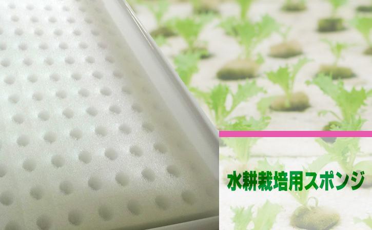 水耕栽培用のスポンジ・スポンジ培地の加工、小売り販売