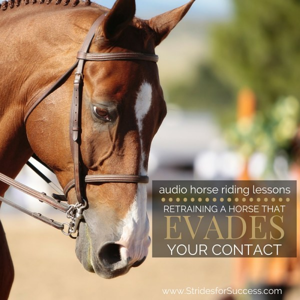 Retraining a Horse that Evades Your Contact