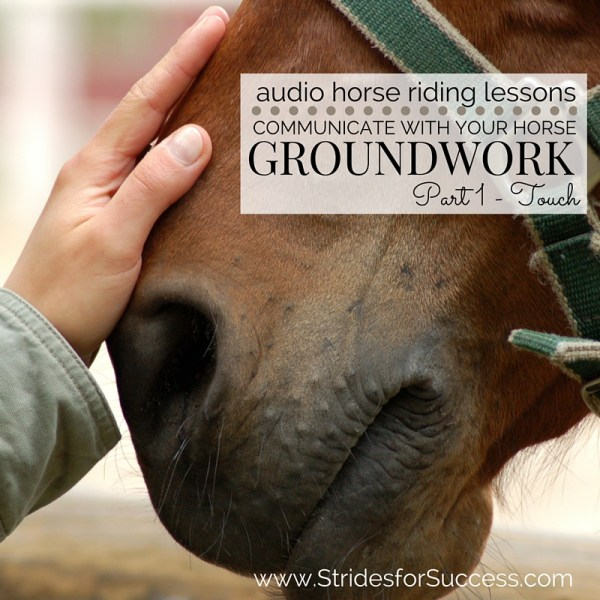 Communicate with your horse through touch - Groundwork part 1