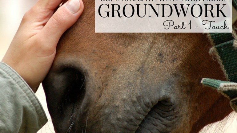 Communicate with Your Horse through Groundwork – Part 1 Touch