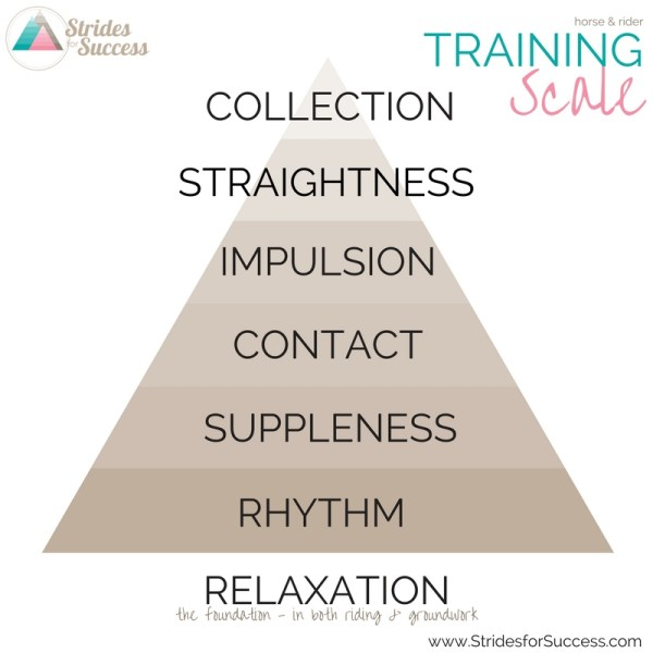 The Training Scale - Strides for Success