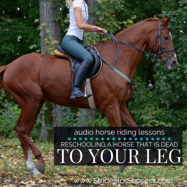 Reschooling a Horse that is Dead to the Leg