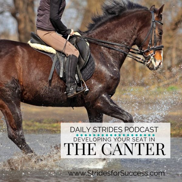 Developing Your Seat in the Canter