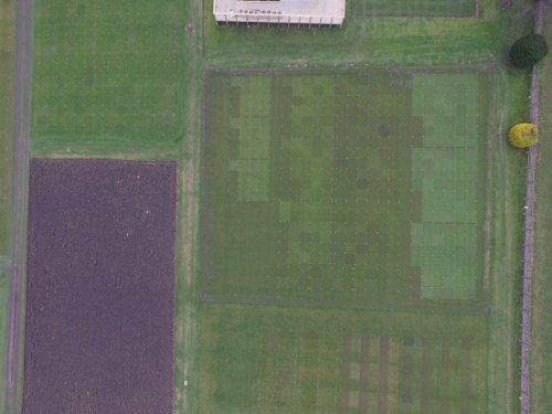 Visual differences among turfgrass cultivars visible from the air