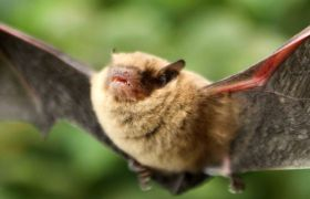 Top tips for golf course bat protection