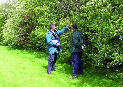Greenkeepers assessing golf course woodland