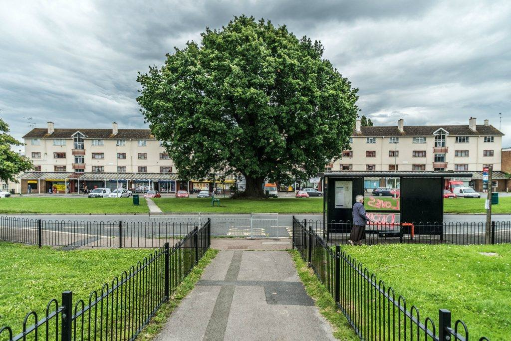 A picture of Matson Green. A Large tree stands proudly in the middle of the green. It is surrounded by estate buildings.