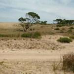 ArDig 2105 2018. Vista Paisaje (Cabo Polonio - Uruguay) - Ag. String agro [17.01.18}
