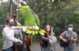 Dirty Cello - Oakland Zoo with Brock the parrot