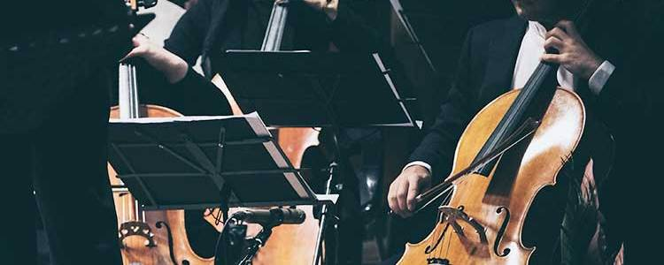 Cellists performing in an orchestra section