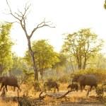 South Luangwa national park | Afrika's best bewaarde geheim