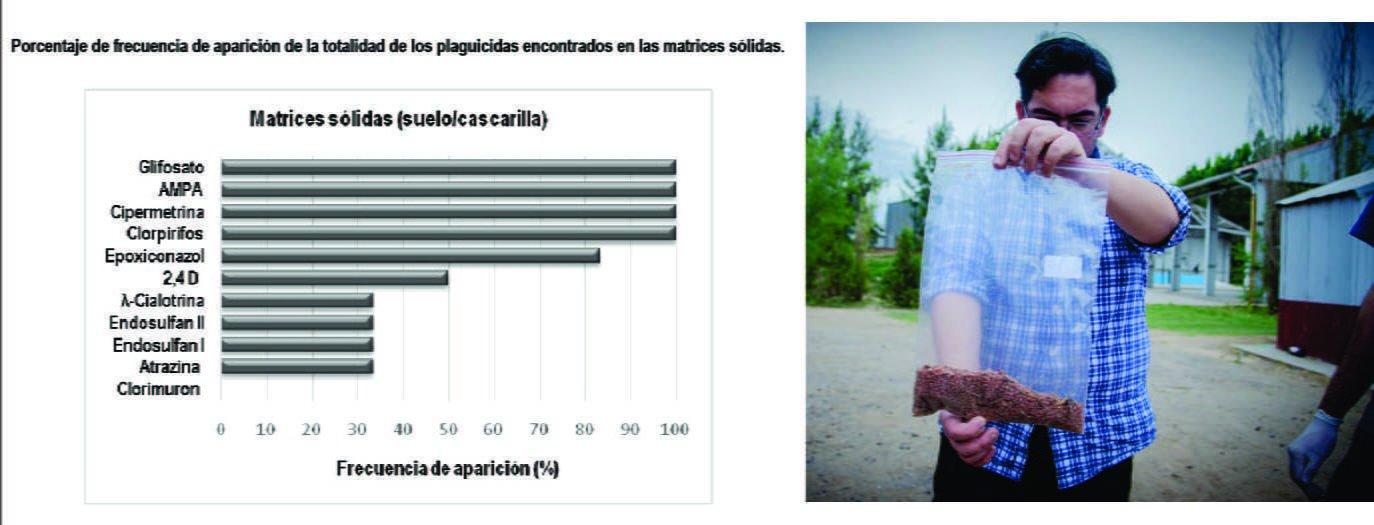 Izq.: Resultados de las muestras obtenidas en suelo y en cascarillas. Der.: muestra de cascarilla de granos dispersos por la ciudad (Ph: Marcos Oviedo)