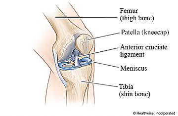 knee diagram