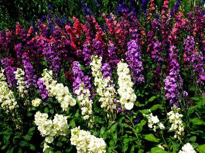 Многолетние цветы цветущие все лето: названия по алфавиту ...