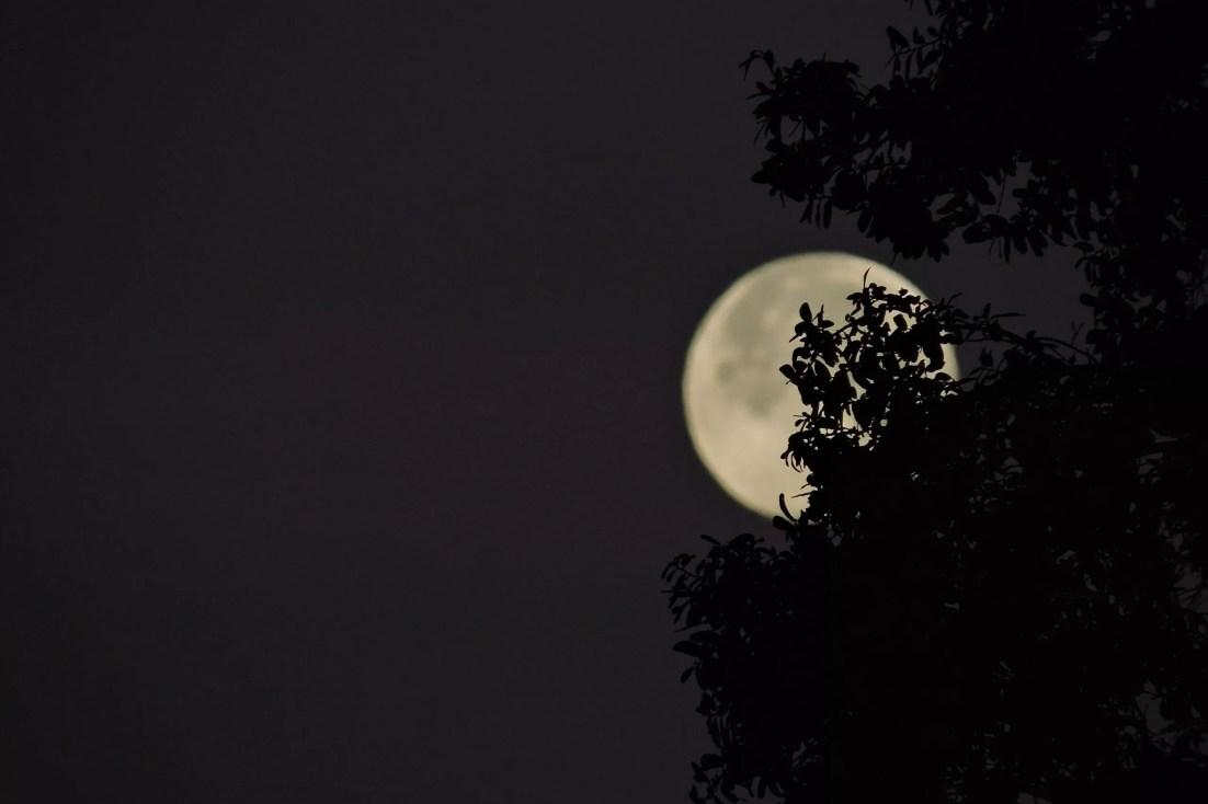 clar de lluna claudi planas i font en pere altres contes literatura catalana català