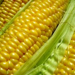 GMO corn seed lawsuit