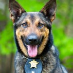 Supreme Court Rules Drug-Sniffing Dogs at Traffic Stops Are Illegal