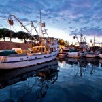 Florida Fisherman Successfully Defends Business License