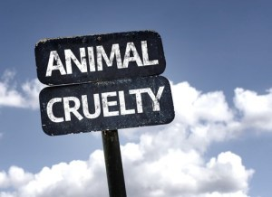 Animal Cruelty Charges