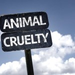 Animal Cruelty or Animal Fighting and Baiting Charges