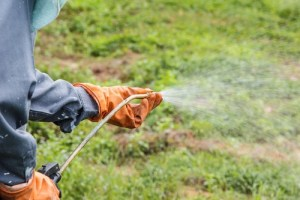 Roundup Deemed Probable Carcinogenic