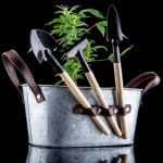 marijuana growing operation