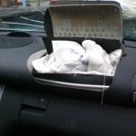 Takata Airbag Defect