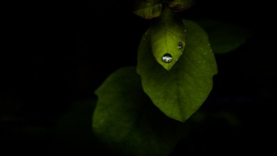 droplet on leaf_300_16-9