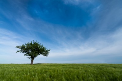 the lone tree_300_3-2