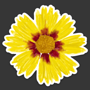 Coreopsis wildflower sticker by Christina Sizemore