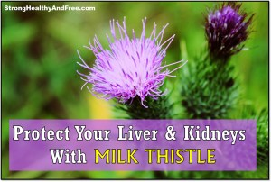 Learn how you can protect your liver and kidneys with milk thistle! #herbs #liverprotection #kidneyshealth