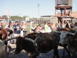 stockyards 5