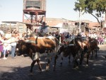 stockyards 6