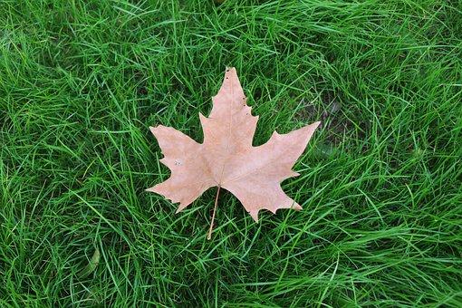 grass-1869960__340