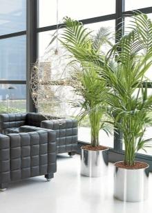 Напольные цветы для дома (23 фото): виды больших комнатных ...