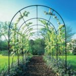 Kolejnym łukiem różanym jest najczęściej spotykana pergola ogrodowa.
