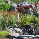 Сорғы қосылған кезде су құю, бұл сайттан сұйылтылған кезде: олар шағын ағынды, оның шағын ағын жасады, олардың шеттеріне гүлдер отырғызылды. Және мини-резервуар өмірді қазір өсімдіктермен отырғызды
