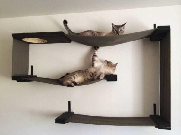 Combinação de prateleiras para gatos com redes ... quase trabalho de arte