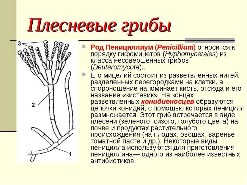 Пениноцилий