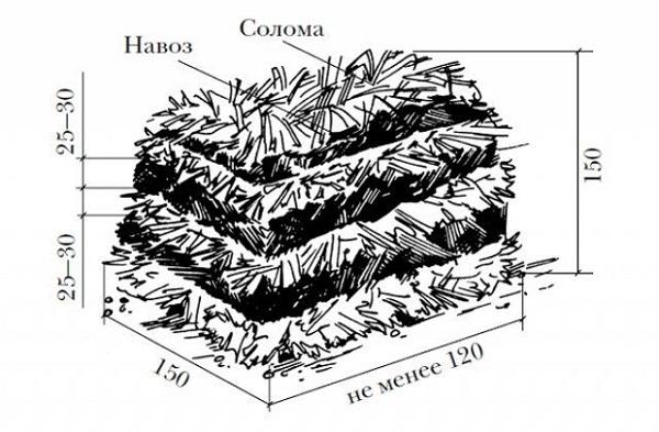Un'altra variante della preparazione del substrato non è quella di mescolare e posare i componenti degli strati, fertilizzanti e enzimi parlanti