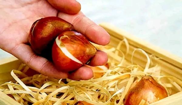 Лучше хранить луковицы в холщовых мешках или специально подготовленных ящиках