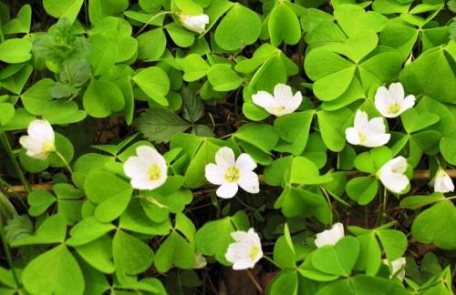 Виды сорняков: название, описание, фото | Строительный портал