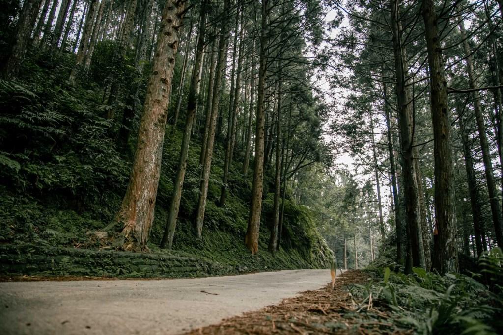 新竹 羅山林道 戶外 登山車 下坡車