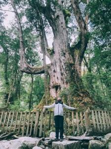 司馬庫斯-巨木林道