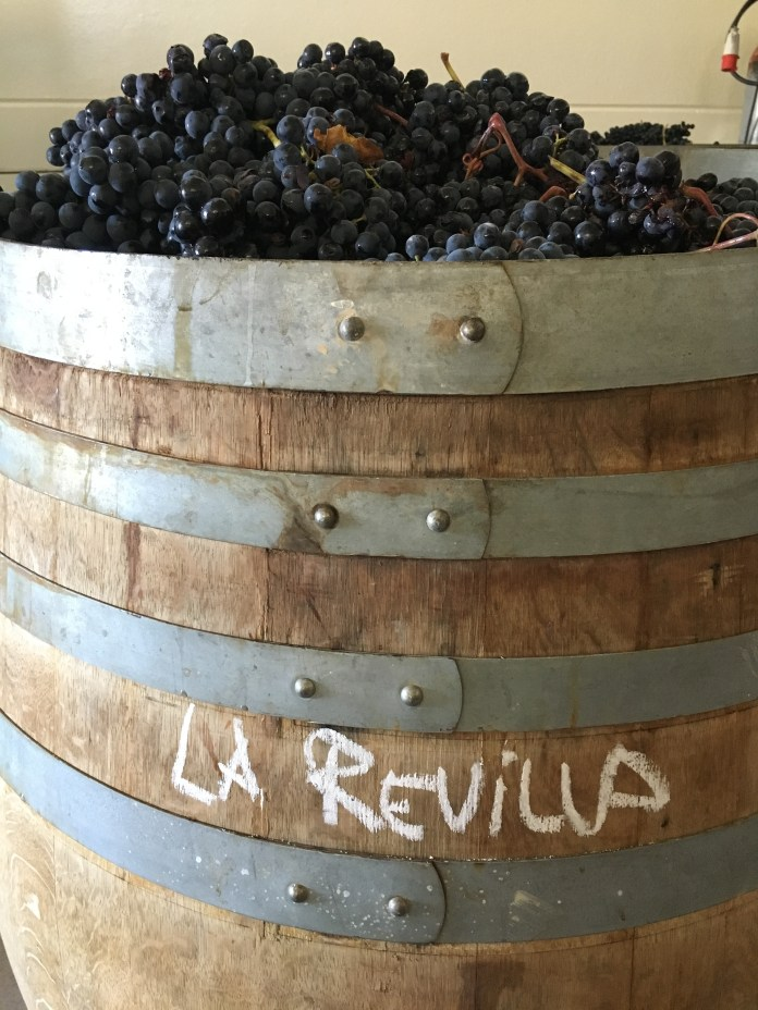 All of our single vineyards are foot-crushed and fermented in 500 L barrels