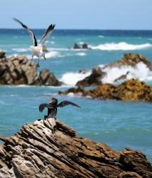 Struisbaaioceans Guest House Oceans