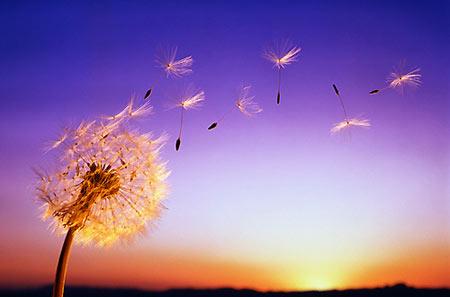 Status hay Thu về có gió và nắng hanh hao, có những màu hoa lung linh khoe hương sắc